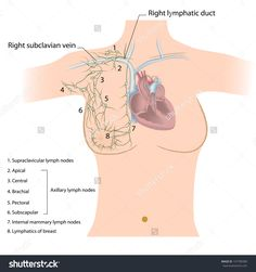 breast and axilla assessment documentation